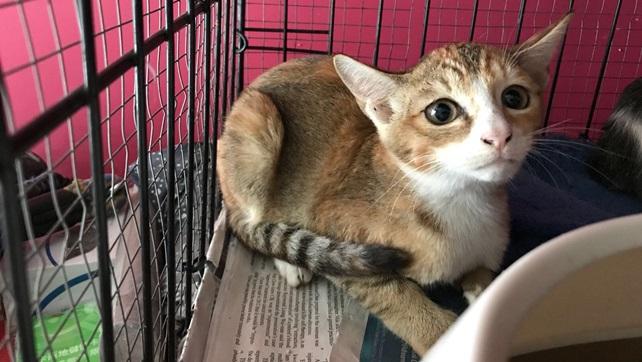 Bobbie (F); 4 months old post on Facebook for adoption