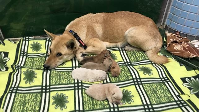 1972-Zanna was found gave birth to five puppies, 1973-Zandra, 1974-Zalla, 1977-Zavier, 1978-Zeno and 1979-Zeki (2)