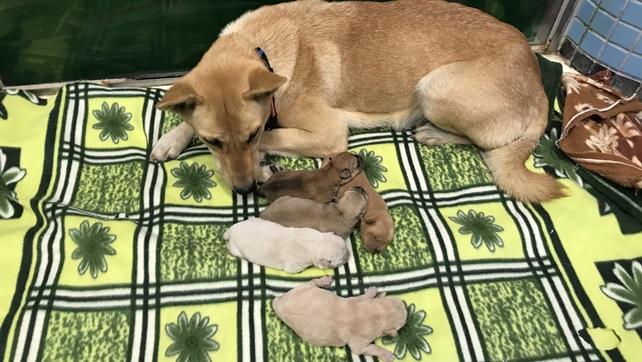 1972-Zanna was found gave birth to five puppies, 1973-Zandra, 1974-Zalla, 1977-Zavier, 1978-Zeno and 1979-Zeki